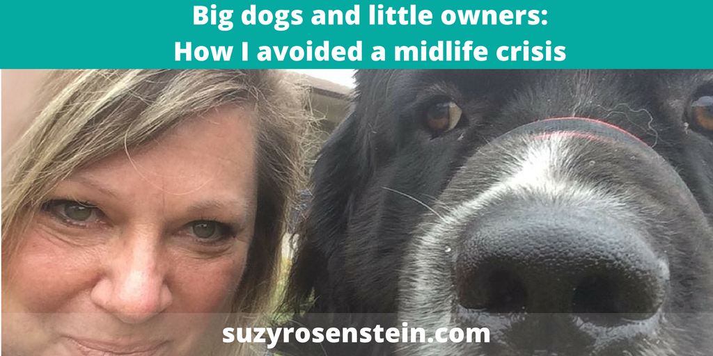 coach blog midlife crisis big dog