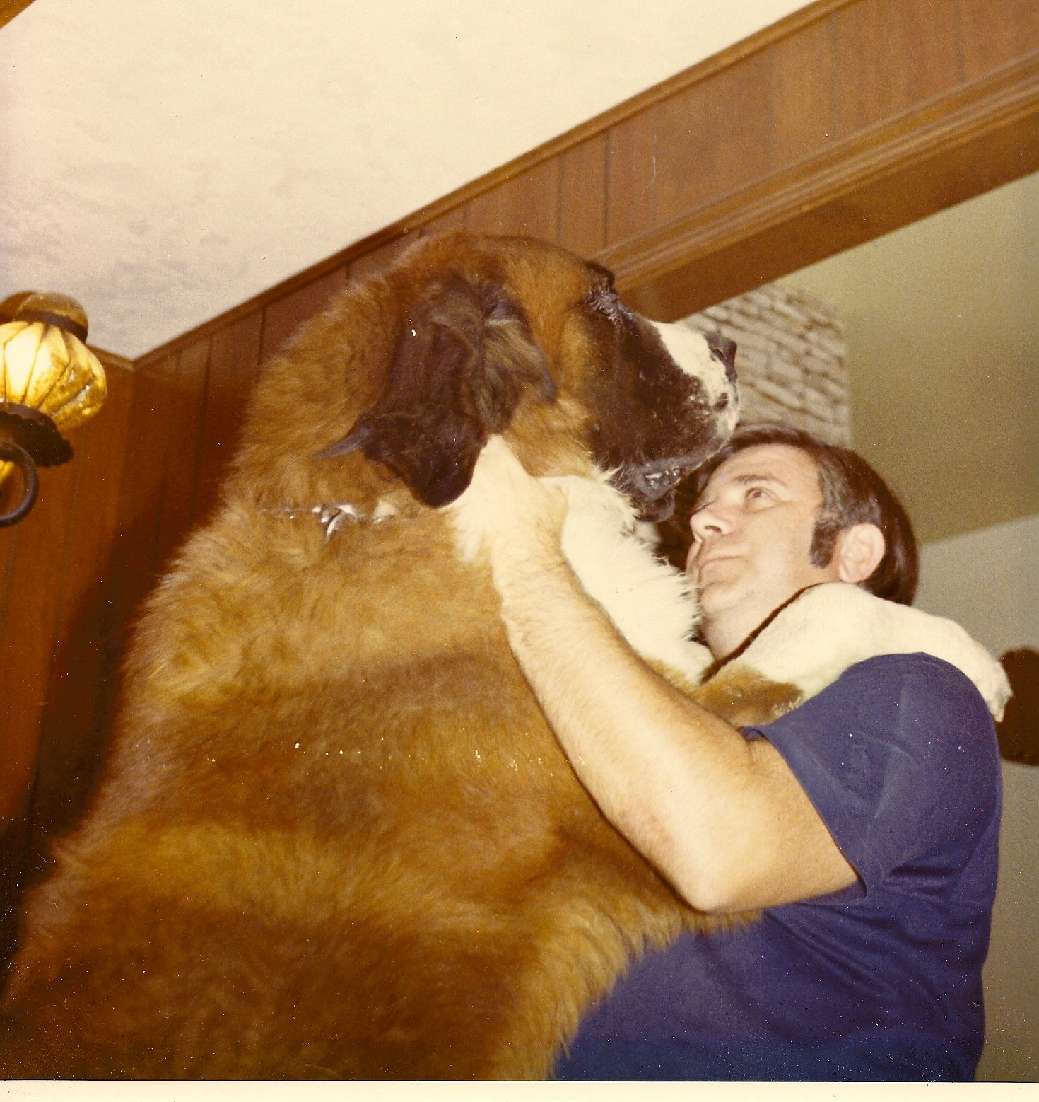 Mr. Jack The St. Bernard with My Dad