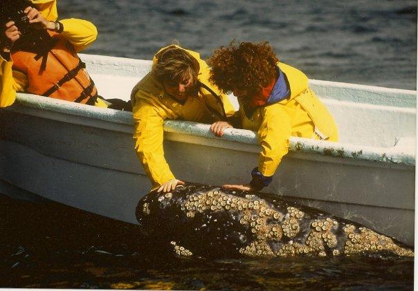 midlife_noregrets_baja_whalewatching