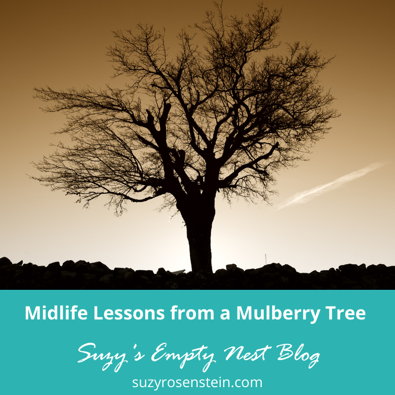 midlife lessons tree